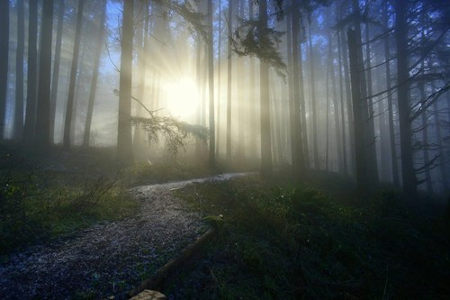 Forest mysterious foggy sunlight