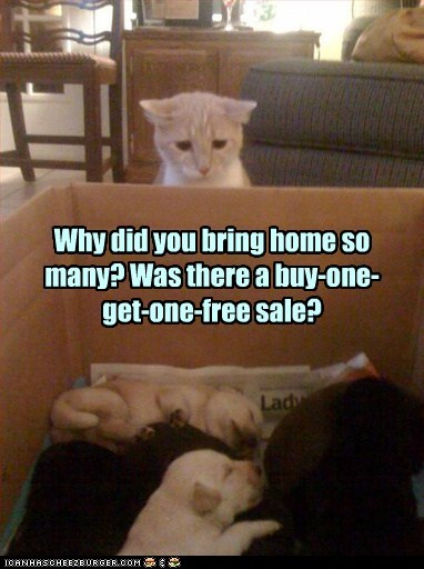 Why did you bring home so many? Was there a buy-one- get-one-free sale?