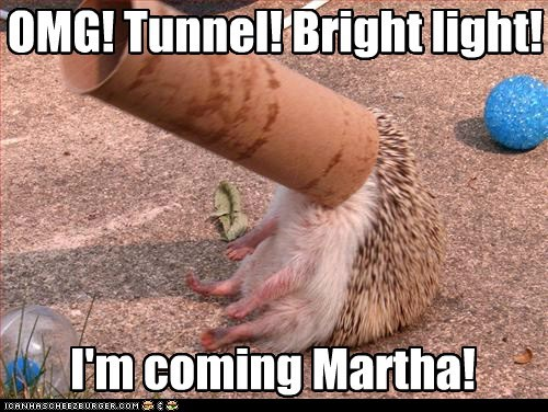OMG! Tunnel! Bright light! I'm coming Martha!