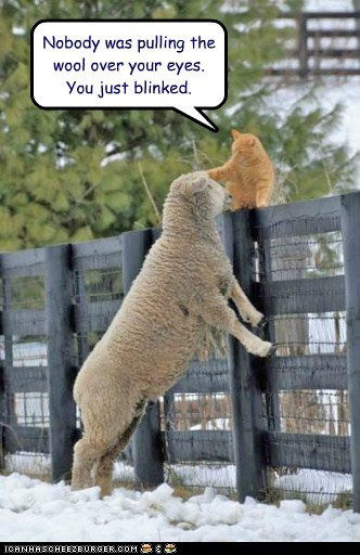 cat friends lamb farm funny - 6992592128