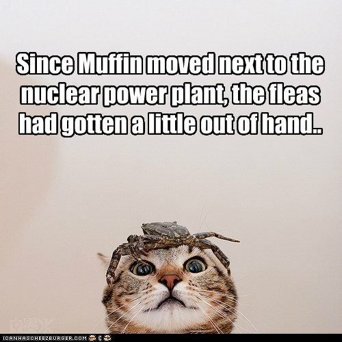 Since Muffin moved next to the nuclear power plant, the fleas had gotten a little out of hand..