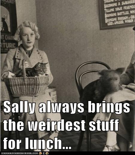 cat lunch weird basket - 6992897024
