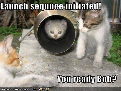 cute kitten lolcats lolkittehs outer space - 699310336