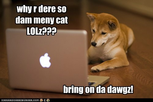 laptops,lolcats,dogs,too damn high,shiba inus