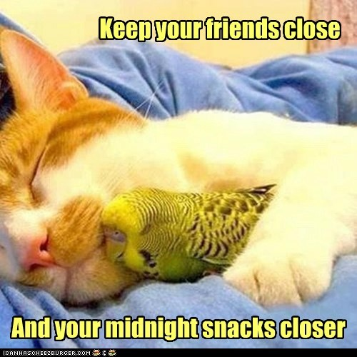 Keep your friends close And your midnight snacks closer