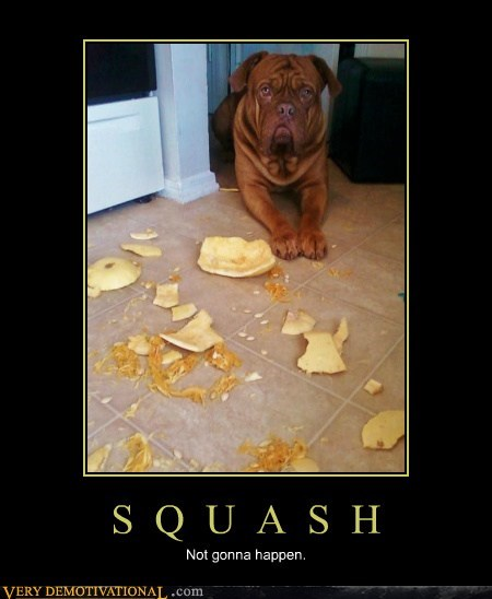 Sad squash dogs - 6993630976