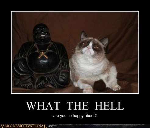 cat,buddha,happy,frown