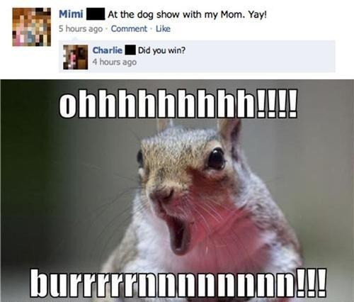 dog show,facebook,mom,burn