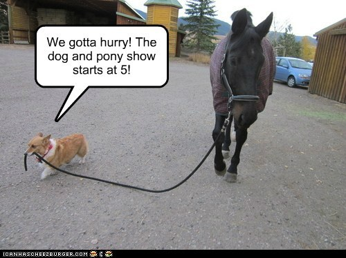 dogs,corgi,Dog and Horsey Show,horses,hurry