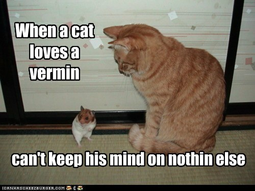 When a cat loves a vermin can't keep his mind on nothin else