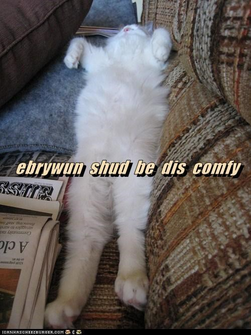 cat lazy couch comfy funny - 6993749248