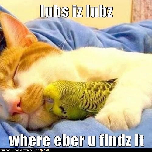 cat,friends,love,bird,funny