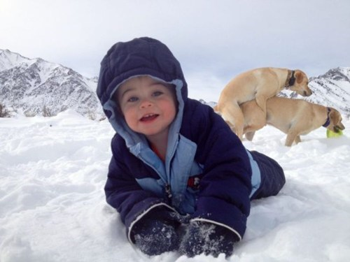 dogs,snow,photobombs,doing it