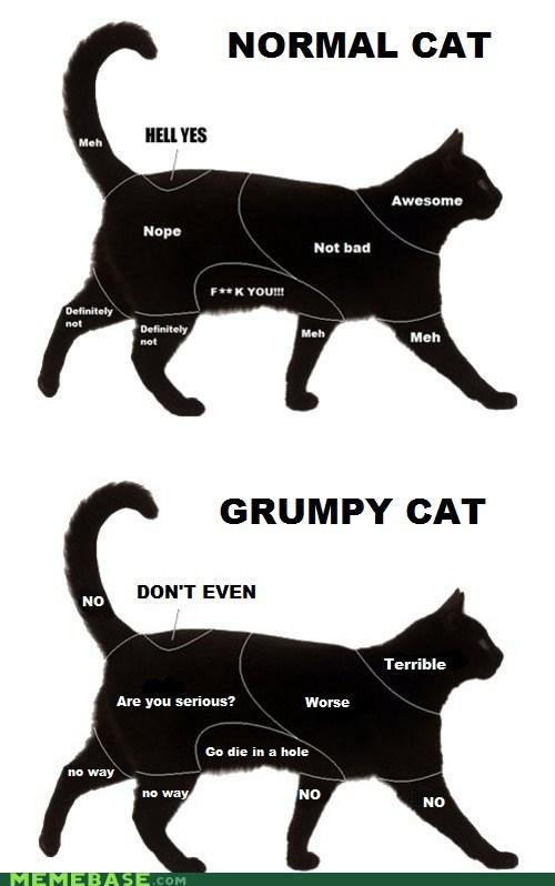 Grumpy Cat re-frames Cats - 6994132992