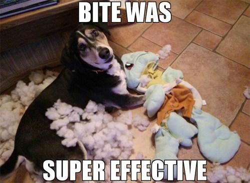 Battle houndoor IRL squirtle super effective dogs
