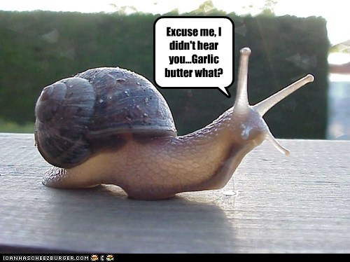 excuse me butter escargot garlic hearing food eating snail