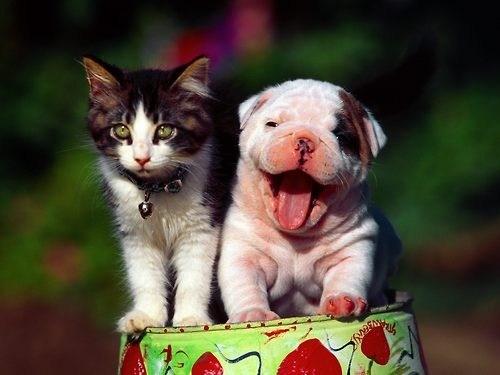 dogs interspecies puppy kitten goggies r owr friends Cats smile - 6994261504