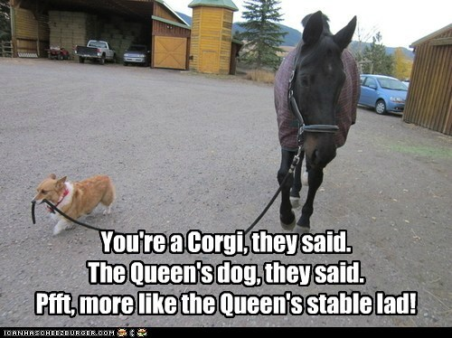 You're a Corgi, they said. The Queen's dog, they said. Pfft, more like the Queen's stable lad!