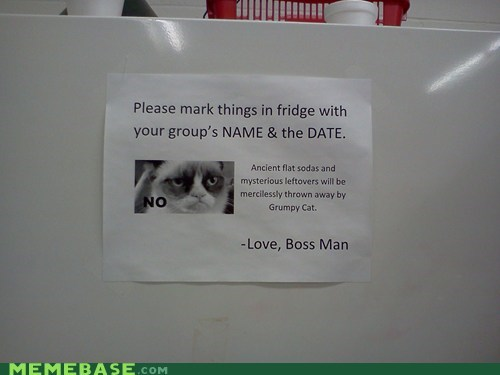 work,Grumpy Cat,fridge