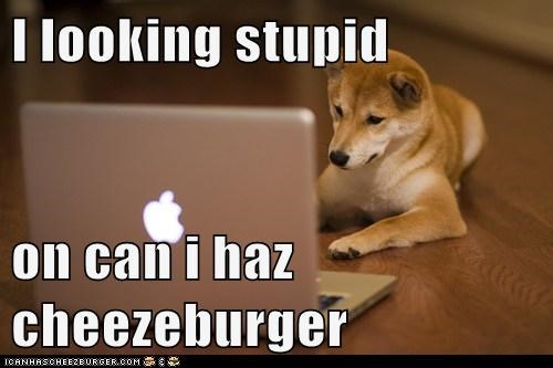 Cheezburger Image 6994321408