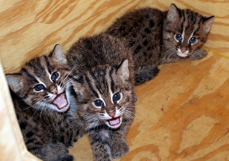 Babies kitten fishing cats squee spree Cats squee - 6994357760