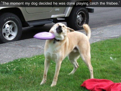 dogs catch frisbee derp
