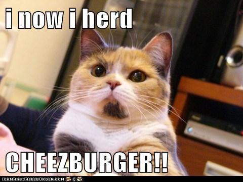Cheezburger Image 6994599680