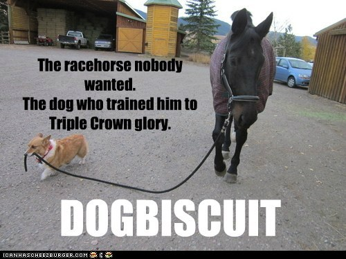 The racehorse nobody wanted. The dog who trained him to Triple Crown glory. DOGBISCUIT