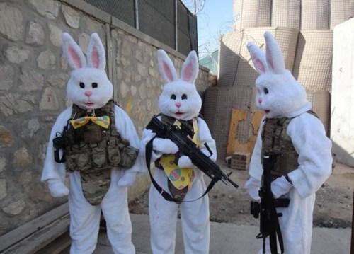 bunnies,guns,military