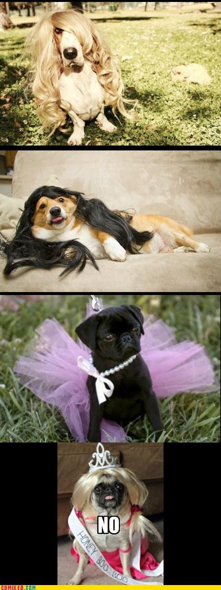models goggies cute dogs - 6996352768