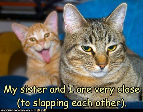 cat fight slap family sister Cats funny - 6996383744