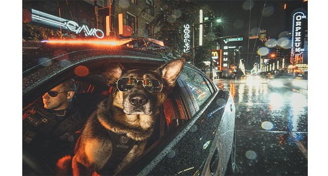 Calendar photos of Vancouver Police dogs being all cops and stuff