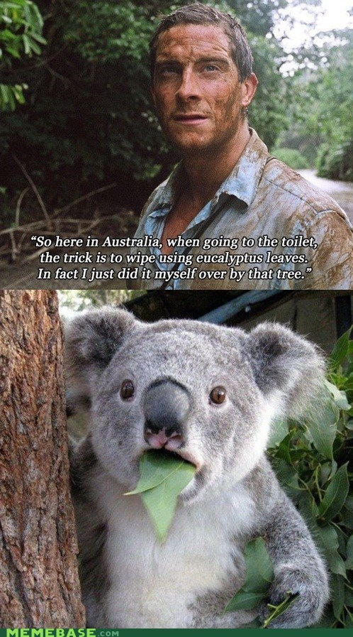 bear grylls,pooptimes,cant-believe-it-koala