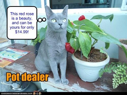 cat drugs rose pot flowers funny - 6996624896