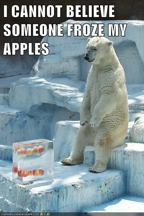polar bear,froze,really,prank,angry,apples
