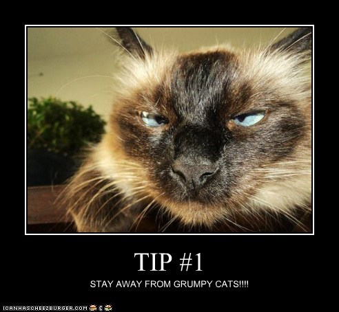TIP #1 STAY AWAY FROM GRUMPY CATS!!!!