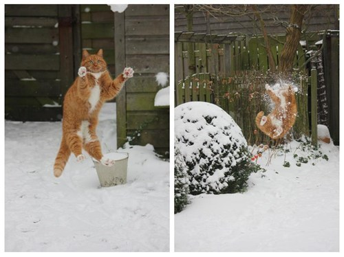 headshot,catch,FAIL,snowball,snow,winter,Cats