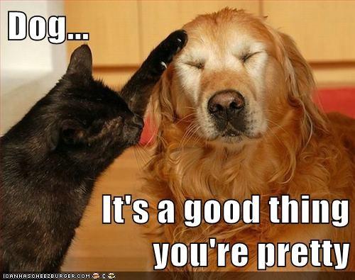 brains dumb Cats beautiful - 6997048576