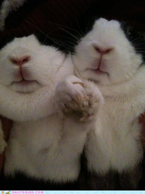 Bunday,bunnies,reader squee,holding hands,squee,rabbits