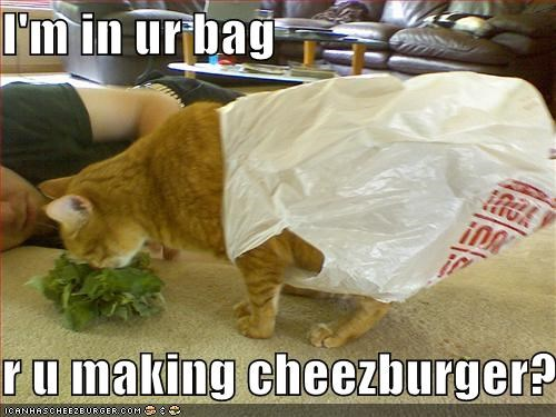 Cheezburger Image 699715840