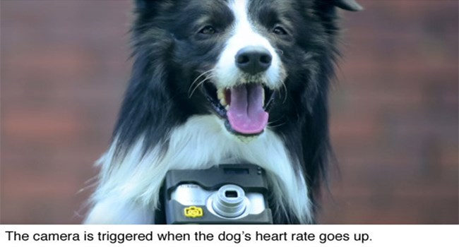 excited cute doggo dog photographer - 6997765