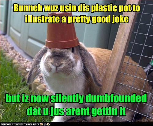 bunnies dumbfounded bunnehs illustrate joke not getting it