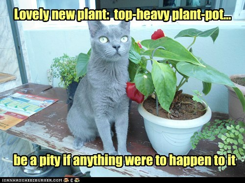 cat,plants,pot,flowers,funny
