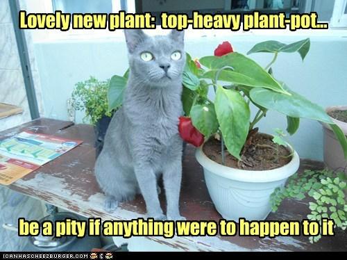 cat plants pot flowers funny - 6997886208