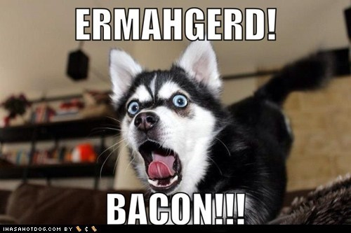 dogs Ermahgerd puppies huskies bacon - 6998002944