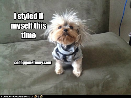 I styled it myself this time sodoggonefunny.com