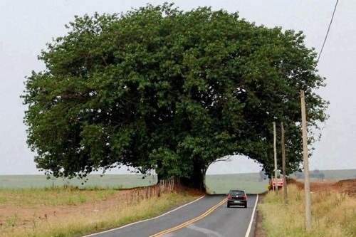 road,tree,tunnel,road trip