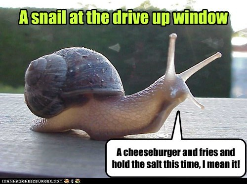 A snail at the drive up window A cheeseburger and fries and hold the salt this time, I mean it!