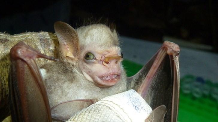 unusual animal photos photos weird animals - 6998277