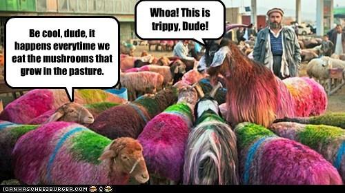 colors high woah trippy sheep Mushrooms - 6998310912